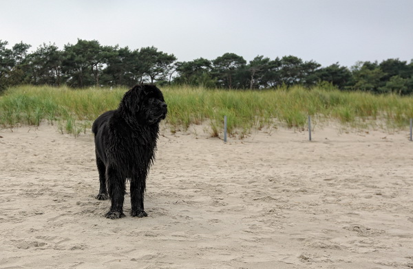 Shelly-Ostsee1